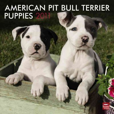 American Pit Bull Terrier Puppies 2011
