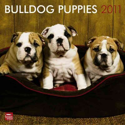 Bulldog Puppies 2011