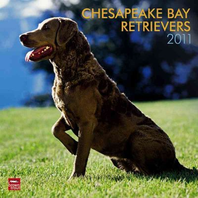 Chesapeake Bay Retrievers 2011