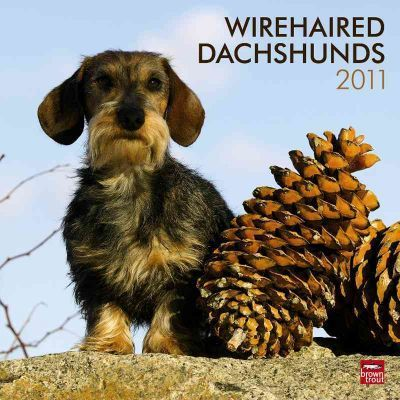 Wirehaired Dachshunds 2011