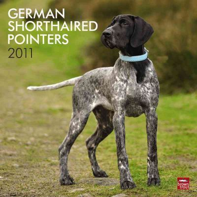 German Shorthaired Pointers 2011