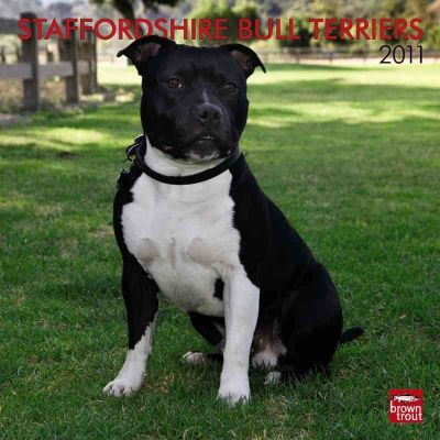 Staffordshire Bull Terriers 2011