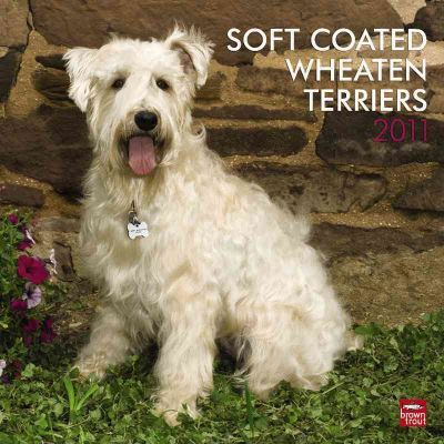 Soft Coated Wheaten Terriers 2011