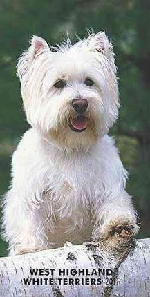 West Highland White Terriers 2011 Slim Diary