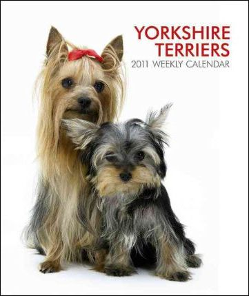 Yorkshire Terriers 2011 Desk Diary