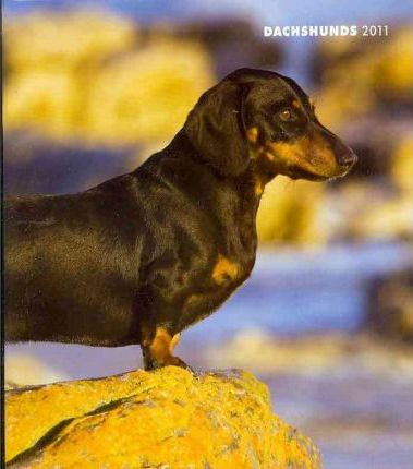 Dachshunds 2011 Monthly Personal Planner