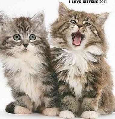 I Love Kittens 2011 Monthly Personal Planner