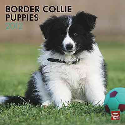Border Collie Puppies 2012 Wall Calendar