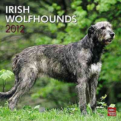 Irish Wolfhounds 2012 Wall Calendar