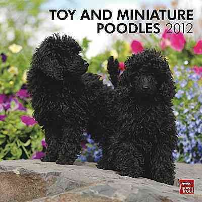 Toy and Miniature Poodles 2012 Wall Calendar