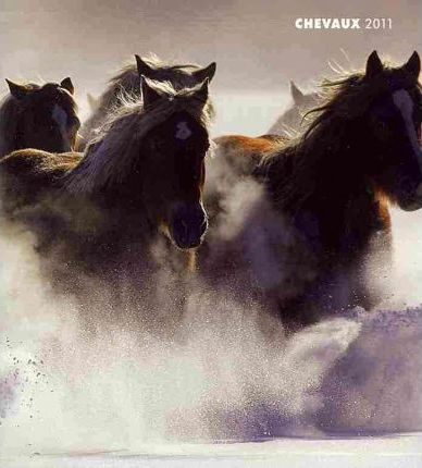 Chevaux 2011 Monthly Personal Planner