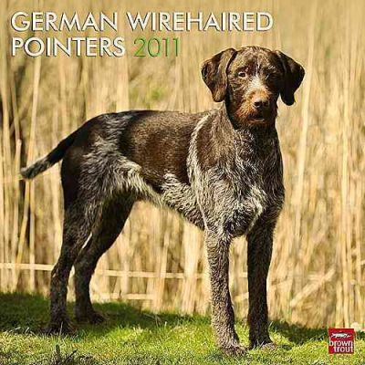 German Wirehaired Pointers 2011 Calendar