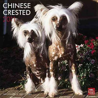 Chinese Crested 2011