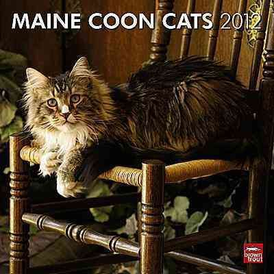 Maine Coon Cats 2012 Wall Calendar