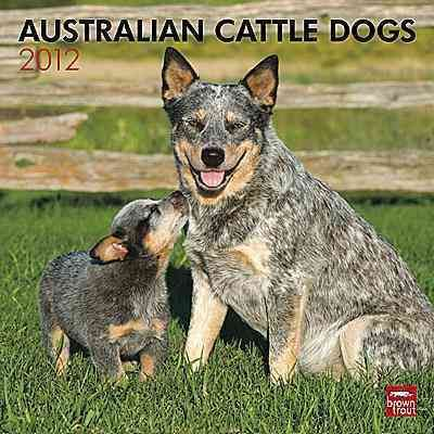 Australian Cattle Dogs 2012 Calendar
