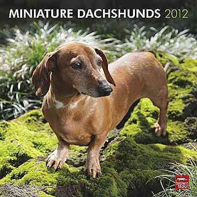 Miniature Dachshunds 2012 Wall Calendar