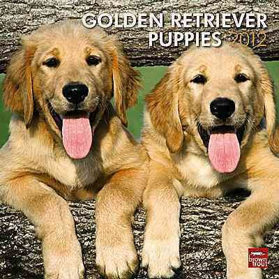 Golden Retriever Puppies 2012 Wall Calendar
