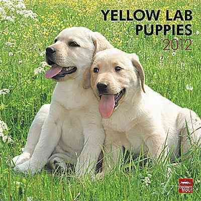 Yellow Labrador Retriever Puppies 2012 Wall Calendar