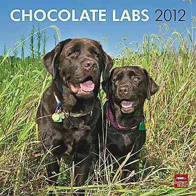 Chocolate Labrador Retriever 2012 Wall Calendar