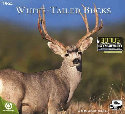 White Tail Bucks 2011 Calendar