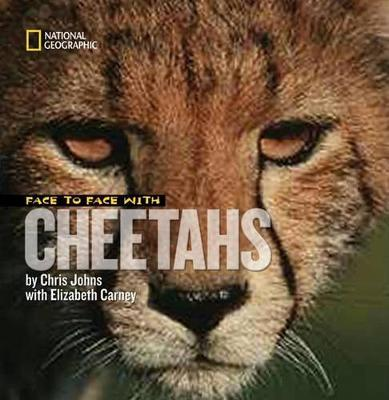 Face to Face with Cheetahs