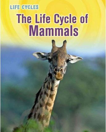 Astrosadventuresbookclub.com The Life Cycle of Mammals Image