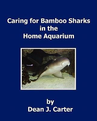 Caring for Bamboo Sharks in the Home Aquarium