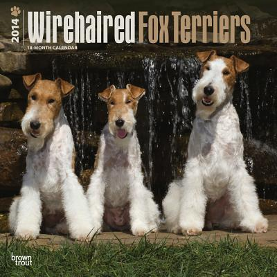 Wirehaired Fox Terriers 2014 Wall Calendar