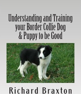 Understanding and Training Your Border Collie Dog & Puppy to Be Good