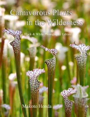 Carnivorous Plants in the Wilderness: Black & White Photography Edition