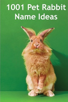 1001 Pet Rabbit Name Ideas  The Most Popular, Quirky, and Fun Names You Could Give Your Pet Rabbit!