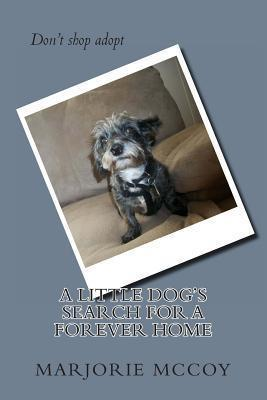 A Little Dog's Search for a Forever Home