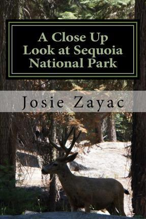 A Close Up Look at Sequoia National Park