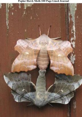 Poplar Hawk Moth 100 Page Lined Journal