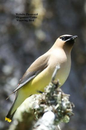 Website Password Organizer Cedar Waxwing Bird
