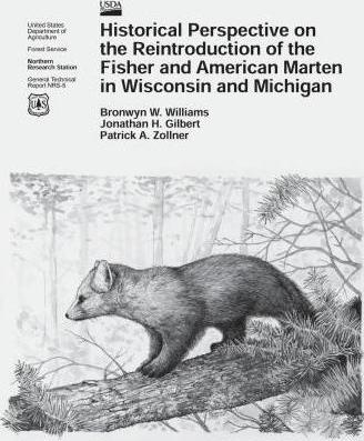 Historical Perspective on the Reintroduction of the Fisher and American Marten in Wisconsin and Michigan