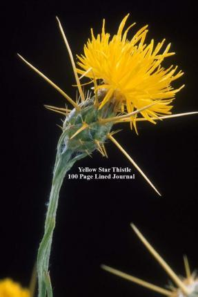 Yellow Star Thistle 100 Page Lined Journal