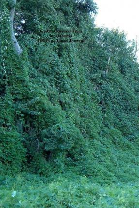 Kudzu Covered Trees in Alabama 100 Page Lined Journal