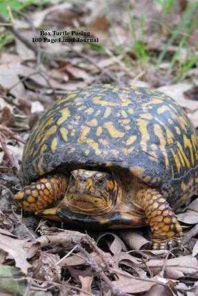 Box Turtle Posing 100 Page Lined Journal