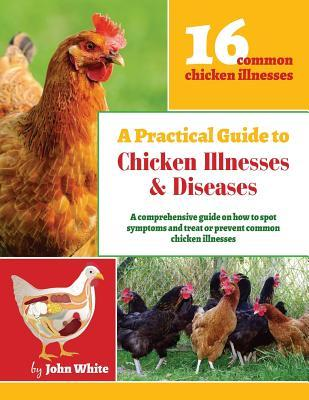 A Practical Guide to Chicken Illnesses & Diseases
