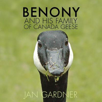 Benony and His Family of Canada Geese