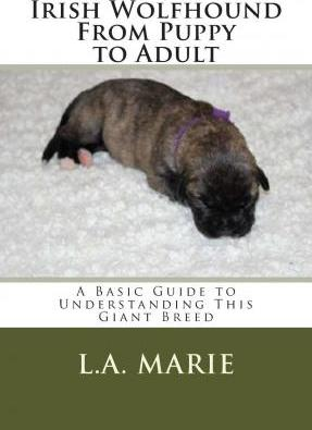 Irish Wolfhound from Puppy to Adult: A Basic Guide to Understanding This Giant Breed