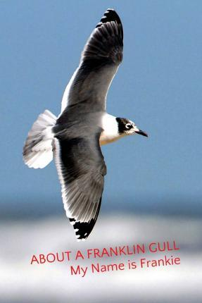 About a Franklin Gull