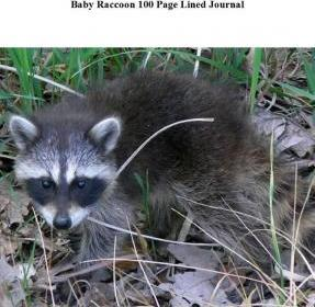 Baby Raccoon 100 Page Lined Journal