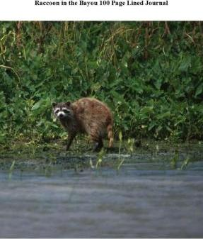 Raccoon in the Bayou 100 Page Lined Journal