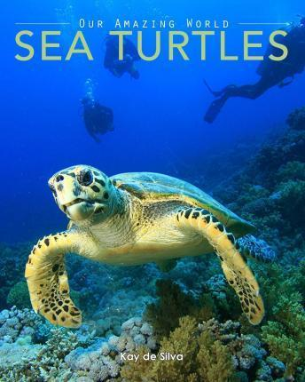 Sea Turtles : Amazing Pictures & Fun Facts on Animals in Nature