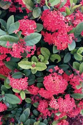 Red Hortensie Hydrangia, for the Love of Flowers  Blank 150 Page Lined Journal for Your Thoughts, Ideas, and Inspiration