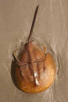 Horseshoe Crab Journal  150 Page Lined Notebook/Diary