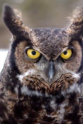 Great Horned Owl Journal  150 Page Lined Notebook/Diary