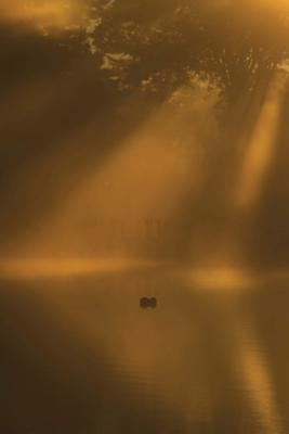 Sunlight Reflections on Golden Pond Journal  (notebook, Diary, Blank Book)